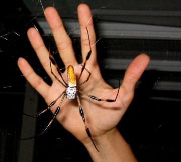 Heather-banana-spider